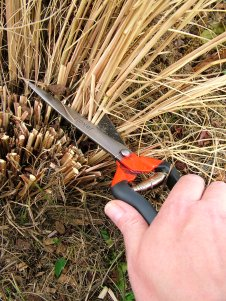 Cutting Down Ornamental Grasses with Jakoti Hand Shears